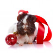 Guinepig with tape and sphere — Stock Photo #18910099