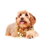 Decorative beige dog in gold ornament — Stock Photo