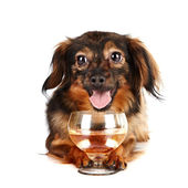 Decorative dog with a glass — Stock Photo
