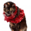 Cat in red ornament sits — Stock Photo