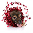 Decorative dog with ornament from tinsel and stars — Stock Photo #19678725