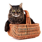 Fluffy cat in a wattled basket — Stock Photo