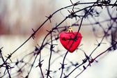 Heart and barbed wire — Stock Photo