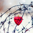 Red heart and barbed wire. — Stock Photo #20056851