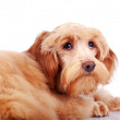 Stock Photo: Decorative doggie