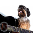 Stock Photo: Decorative doggie and guitar.