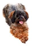 Small decorative doggie — Stock Photo