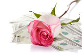 Pink rose flower and money — Stock Photo