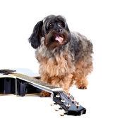 Decorative shaggy doggie and guitar. — Stock Photo