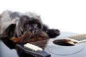 Porträt eines Hundes mit einer Gitarre — Stockfoto