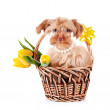 Doggie in a basket with flowers. — Stock Photo