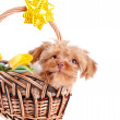 Doggie in a basket. — Stock Photo