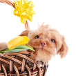 Doggie portrait in a basket with flowers. — Stock Photo