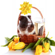 Guinea pig in a basket with a bow, flowers and a champagne glass. - Stock Photo