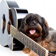 Stock Photo: Doggie and guitar.