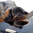 Sad doggie and guitar. - 图库照片