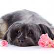 Decorative thoroughbred dog and roses. — Stock Photo #22804796