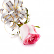 Stock Photo: Rose flower with bow.