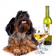 Royalty-Free Stock Photo: Decorative dog with a bottle of wine and glasses