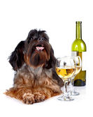 Decorative dog with a bottle of wine and glasses — Stock Photo