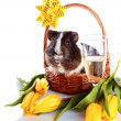 Guinea pig in a basket with a flowers and a champagne glass. - Stock Photo