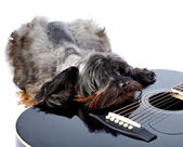 Sad doggie and guitar. — Stock Photo