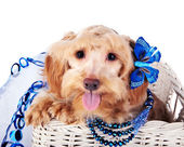 Decorative dog with blue ornament in a white basket — Stock Photo
