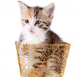 Stock Photo: Multi-colored kitten in gold basket.