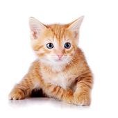 Small red kitten. — Stock Photo