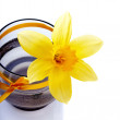 Narcissus flower in a vase with a tape. — Stock Photo #25519647
