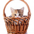 Kitten hiding in a wattled basket. — Stock Photo
