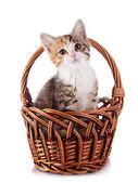 Gatito en una cesta jacana. — Foto de Stock