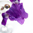 Violet Iris flower in a glass. — Stock Photo