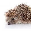 Prickly hedgehog — Stock Photo #26369815