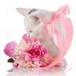 White kitten with pink tape and pink flower. — Stock Photo #27137365