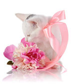 White kitten with a pink tape and a pink flower. — Stock Photo