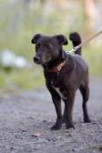 Small black doggie. — Stock Photo