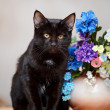 The black cat sits near a small vase with the flowers. — Stock Photo