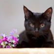 The black cat lies near a small bunch of flowers. — Stock Photo