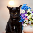 The angry black cat sits near a vase with the flowers. — Stock Photo