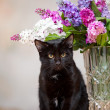The black cat sits near a vase. — Stock Photo