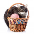 Fluffy cat in wattled basket with woolen balls. — Stock Photo #30516055