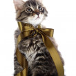 Striped fluffy cat with bow sits — Stockfoto #30674321