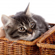 Striped cat with a bow in a wattled basket. — Stock Photo