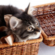 Fluffy cat with a bow in a basket — Stock Photo