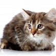 Fluffy scared cat on white background. — Stock Photo #30748009