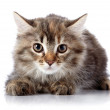 Fluffy beautiful scared cat on white background. — Stock Photo #30748137