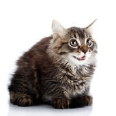 Striped fluffy surprised kitten sits on a white background. — Stock Photo