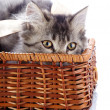 Cat in a wattled basket. — Stock Photo