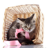 The cat with a pink bow hides in a wattled basket. — Stock Photo